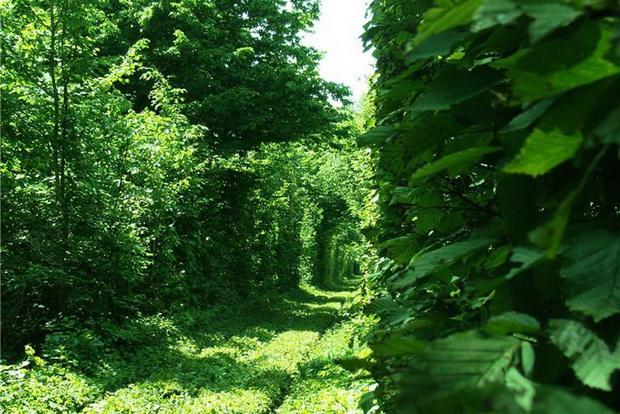 tunelot-na-vljubenite-prirodna-ubavina-koja-mora-da-se-vidi-6