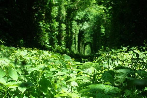 tunelot-na-vljubenite-prirodna-ubavina-koja-mora-da-se-vidi-7