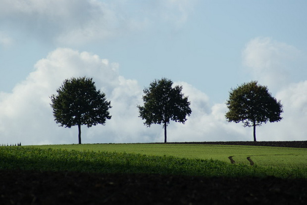 zelbite-na-trite-drvca-moralna-prikazna-1