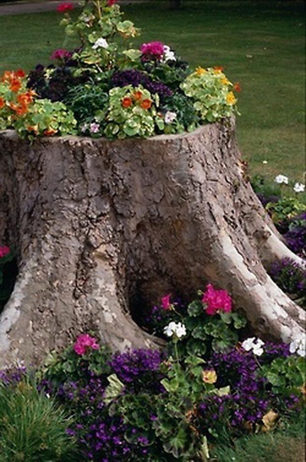 kako-da-zasadite-cveke-vo-star-trupec-od-drvo-02