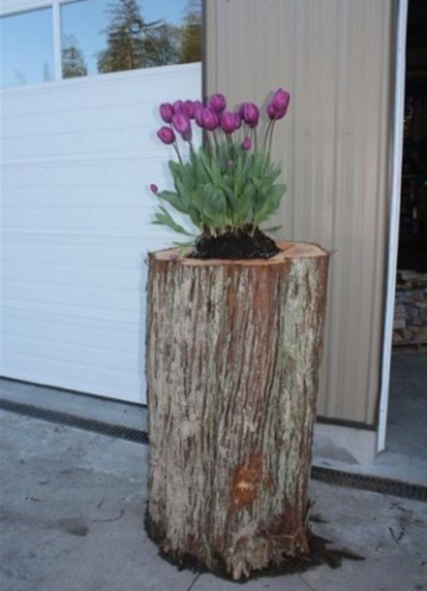 kako-da-zasadite-cveke-vo-star-trupec-od-drvo-05