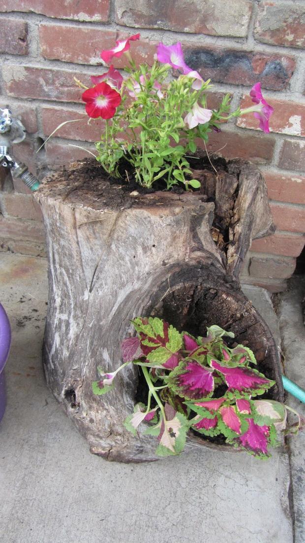 kako-da-zasadite-cveke-vo-star-trupec-od-drvo-11