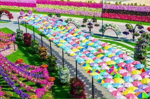 cudesnata-gradina-vo-dubai-so-45-milioni-cvetovi-foto-01