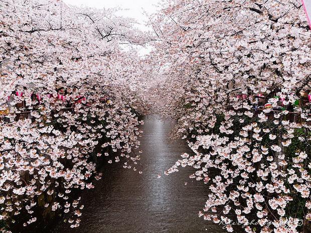 proletta-vo-japonija-e-prekrasna-01