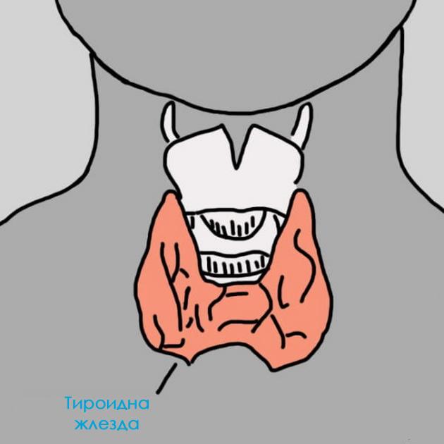 12-znaci-deka-neshto-ne-e-vo-red-so-vashata-tiroidna-zlezda-02.jpg