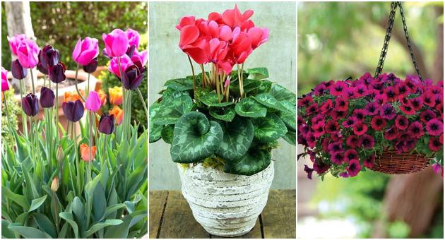 Цвеќиња со кои ќе ја освежите градината и ќе ја дочекате пролетта