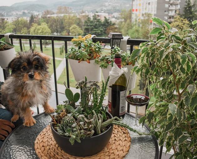 na-gosti-kaj-vera-kalin-vpechatliv-dom-vo-skopje-oboen-vo-zeleno-sivi-tonovi-foto-09.jpg